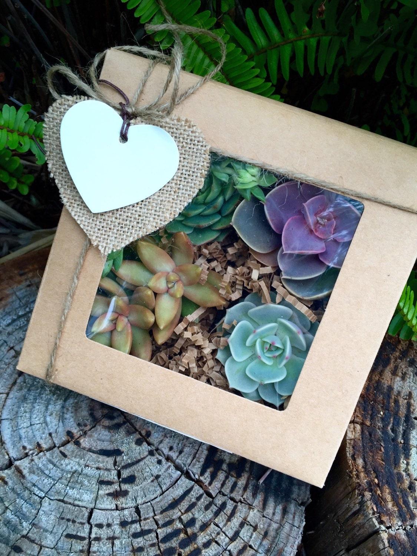 Succulent Treasures Gift Box Four Assorted Premium Succulents Valentine S Day Gift