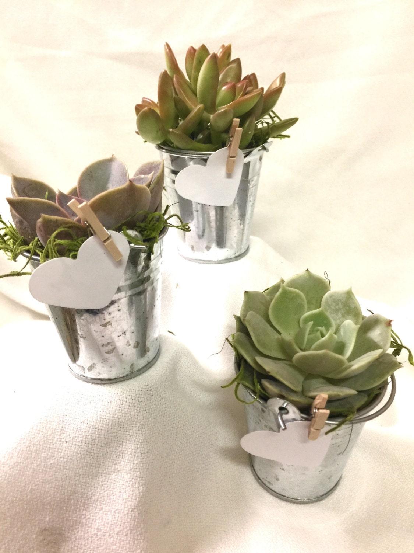 24 Succulent bucket favors, Assorted Premium succulents gifts ...