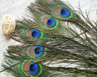 Peacock feathers natural 20-30 cm