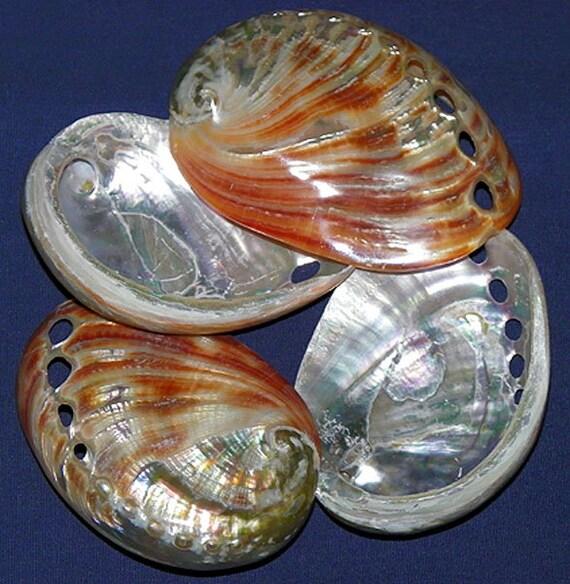 """Natural Red Abalone Half Shells~3/""""~Seashell Craft Supply~ 3 Shells"""