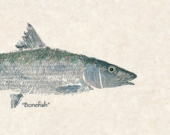 "Limited Edition"" Bonefish "" large gyotaku print"