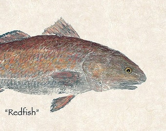 "Limited edition ""Redfish "" gyotaku print"