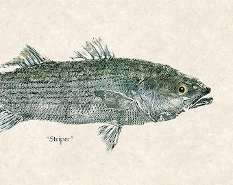 "Large limited edition ""Striper"" gyotaku print"