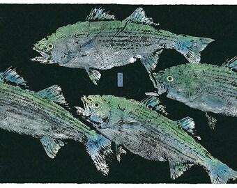 Limited Edition Reproduction of of Original gyotaku Strper Blitz
