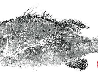 "New Super Size Limited Edition"" Warsaw Grouper "" gyotaku print"