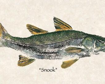 Limited Edition Snook gyotau print