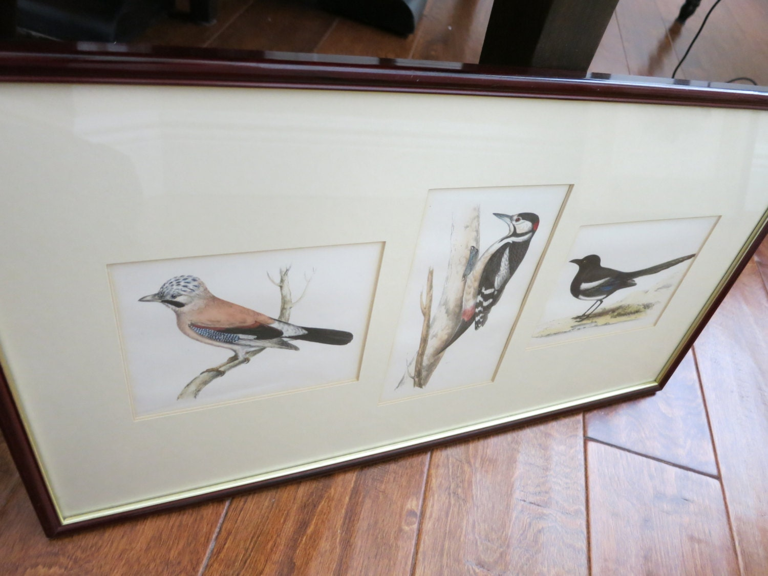 Are you a bird lover? Framed & Matted Original Illustrations of ...