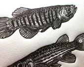 Lined Topminnows: Linocut...
