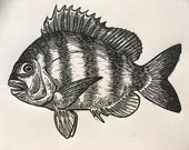 Sheepshead fish fishing a...