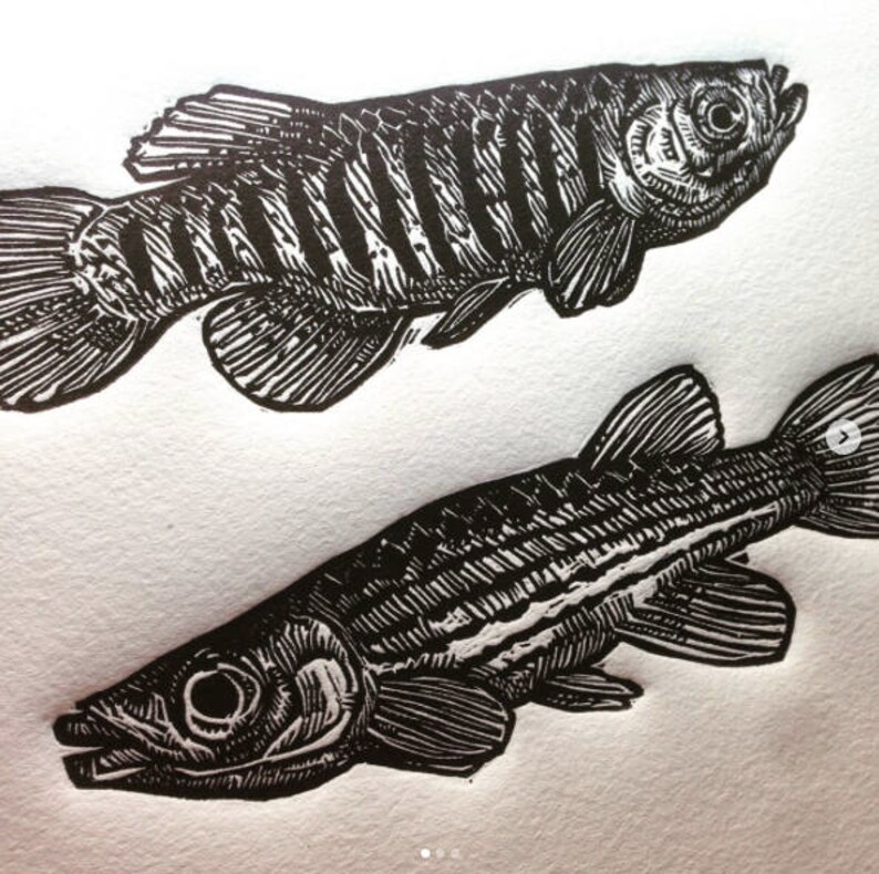Lined Topminnows: Linocut original hand-pulled relief art image 0