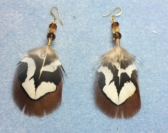 Brown Pheasant Feather Earrings: Brown Reeves pheasant feather earrings adorned with brown Czech glass beads.