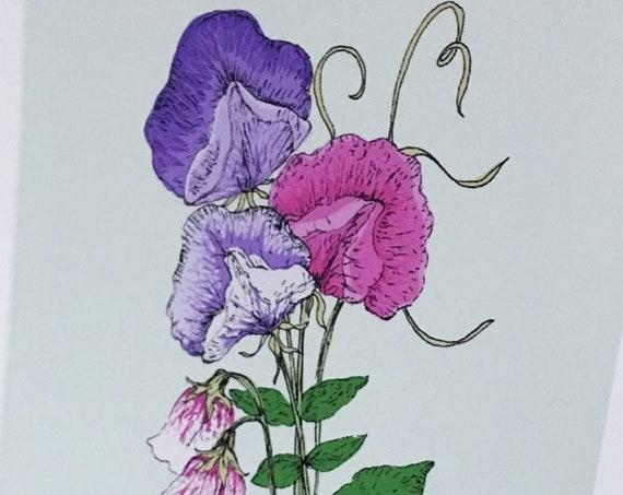 Sweet pea art print for the Flower Power Fund