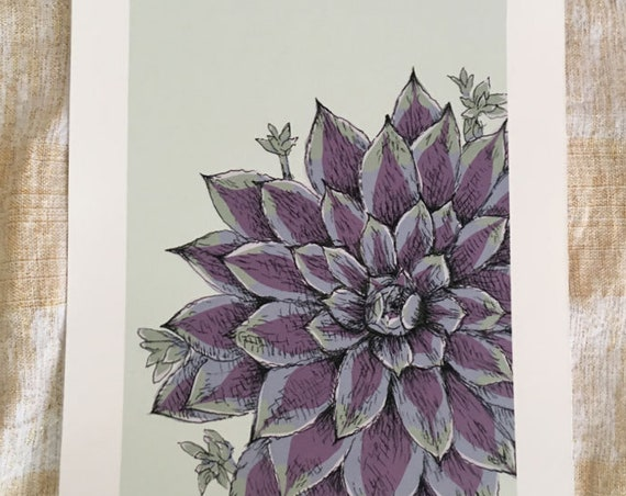 Sempervivum art print for the Flower Power Fund