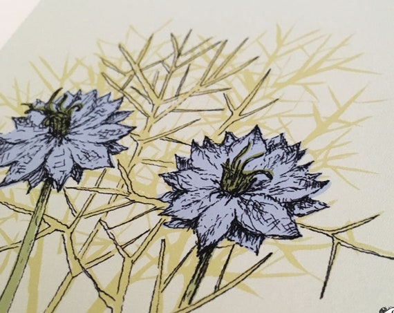 Nigella Love-in-a-Mist art print for the Flower Power Fund