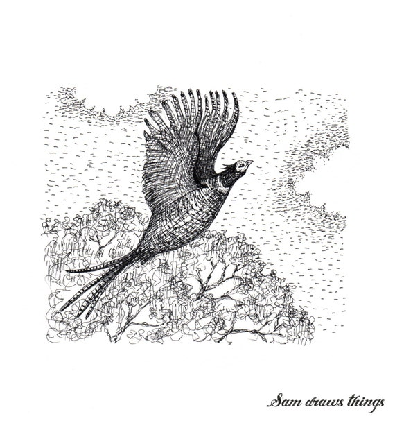 Pheasant in Flight: Original illustration