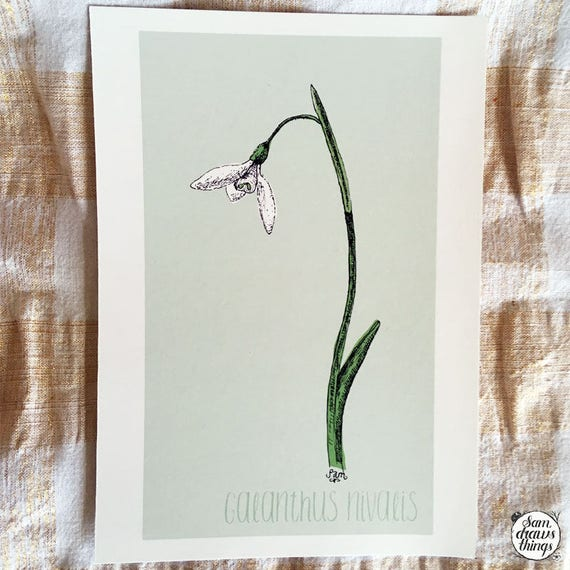 Snowdrop art print for the Flower Power Fund
