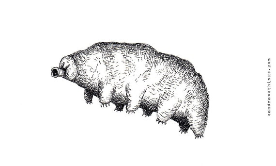 The Weird & Wonderful Water Bear - original illustration