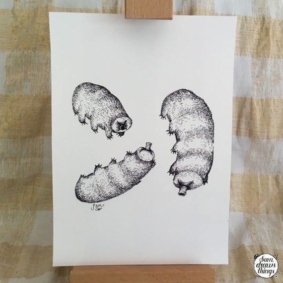 Three little waterbears - tardigrade art print