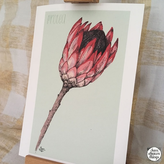 Protea art print for the Flower Power Fund