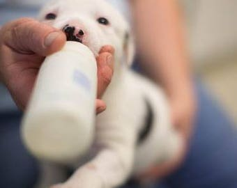 Donate 5 dollars to Sunny Sky's Animal Rescue