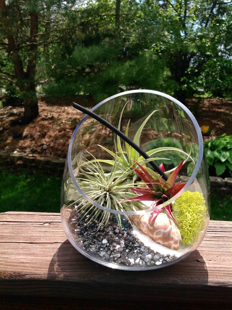 House Plant Air Plant Terrarium Diy Medium Slanted Vase Etsy
