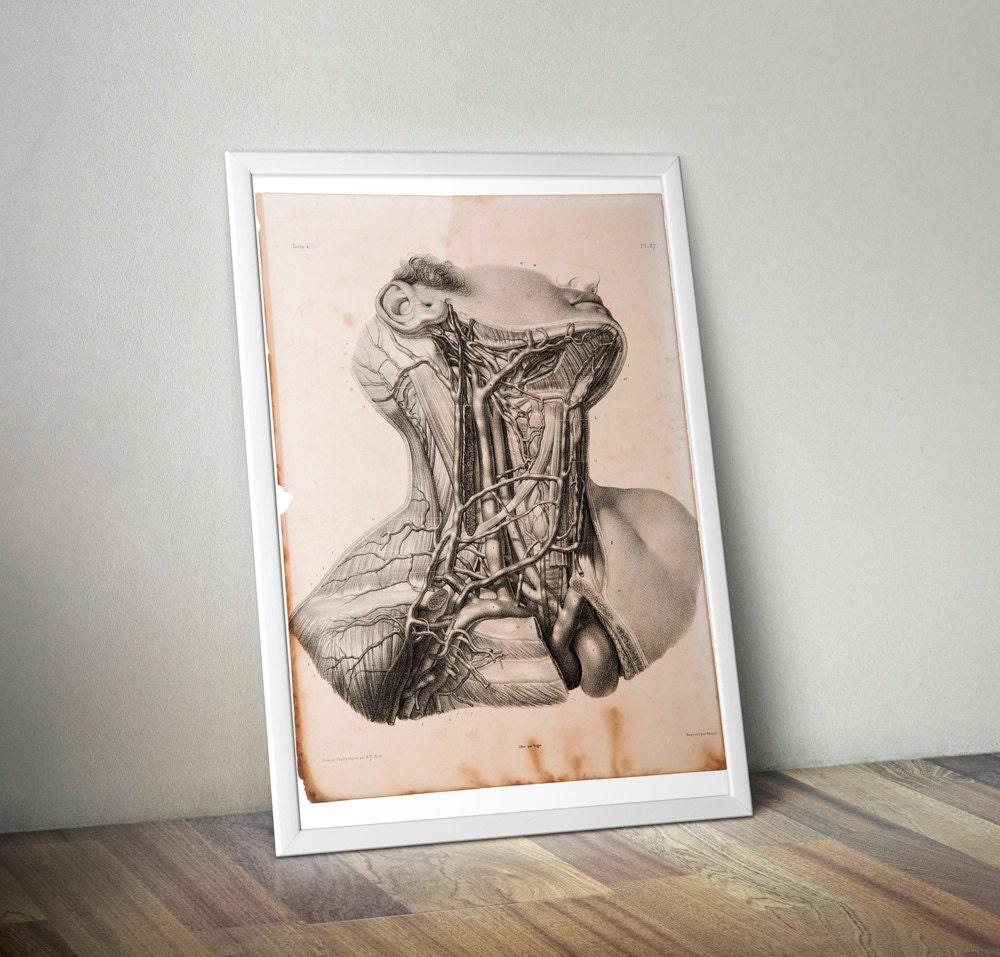 Anatomische Blatt. Hals-Adern. Gängen du Cou. Reproduktion der | Etsy