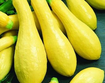 Yellow Squash, Straightneck Early Prolific Zucchini Heirloom Seeds