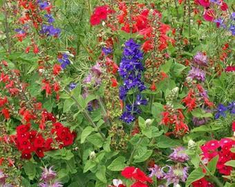 Hummingbird Garden Flower Mix Flower Seeds, Heirloom, Native, Flower Seeds