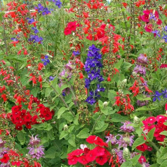 Hummingbird Garden Flower Mix Flower Seeds Non GMO Open   Etsy