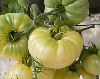 White Beauty Tomato Heirloom Seeds