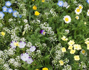 Alternative Lawn Heirloom Seed Mix - Seed Packets, Flower Seeds, Herb Seeds, Non GMO, Open Pollinated, Native Seeds, Wildflower Seeds