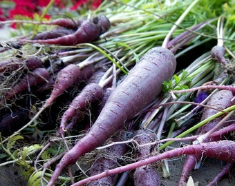Cosmic Purple Carrot Heirloom Seeds - Non-GMO, Open Pollinated, Untreated