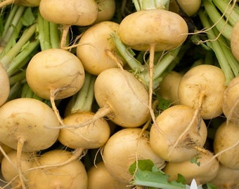 Golden Ball Turnip Heirloom Seeds