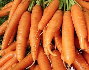 Little Finger Carrot Heirloom Seeds
