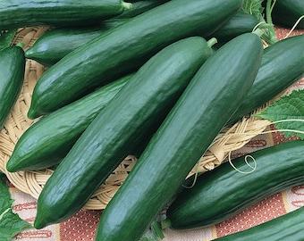 Tendergreen Burpless Cucumber Heirloom Seeds