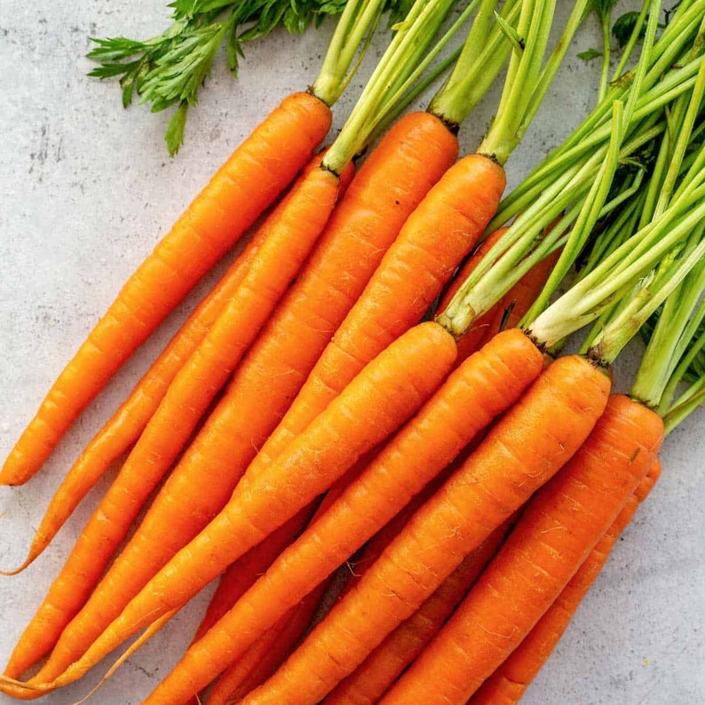 Imperator 58 Carrot Heirloom Seeds image 1