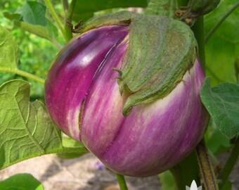Rosa Bianca Eggplant Heirloom Seeds