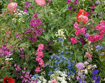 Shade Garden Wildflower Seed Mix - Seed Packets, Heirloom Seeds, Flower Seeds, Non GMO, Open Pollinated
