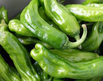 Shishito Sweet Pepper Heirloom Seeds