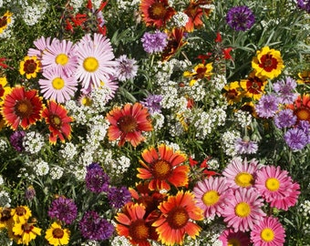 Bird & Butterfly Wildflower Seed Mix - Seed Packets, Heirloom Seeds, Flower Seeds, Non GMO, Open Pollinated
