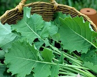 Premier Kale Heirloom Seeds