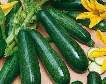 Black Beauty Zucchini Summer Squash Heirloom Seeds