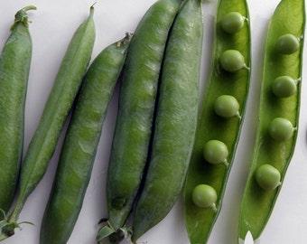 Green Arrow Garden Pea Heirloom Seeds