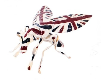 Union Jack Insect