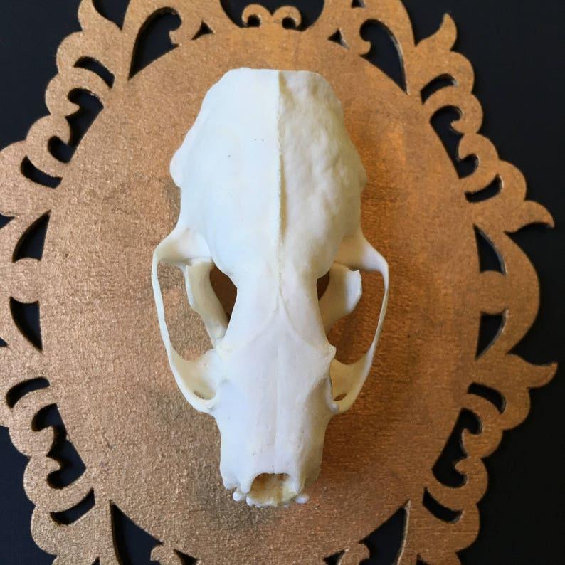 Mounted Mink Skull