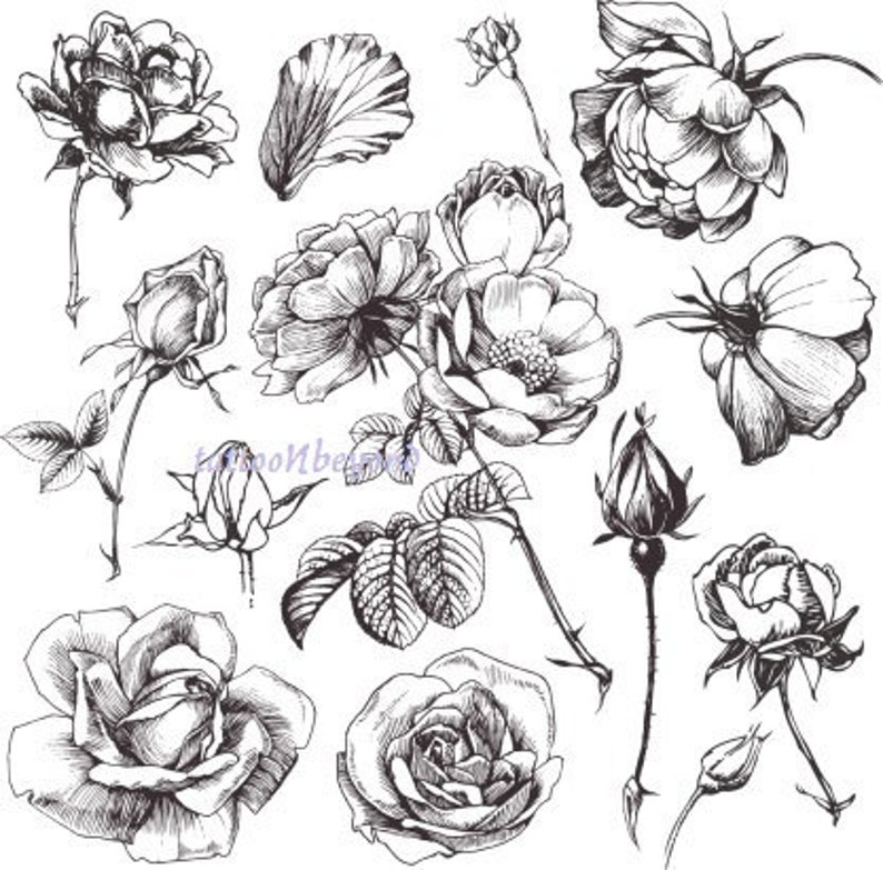 Temporary Tattoo  13 Roses / Set of 11 Apples / Tattoo Flash 13 ROSES
