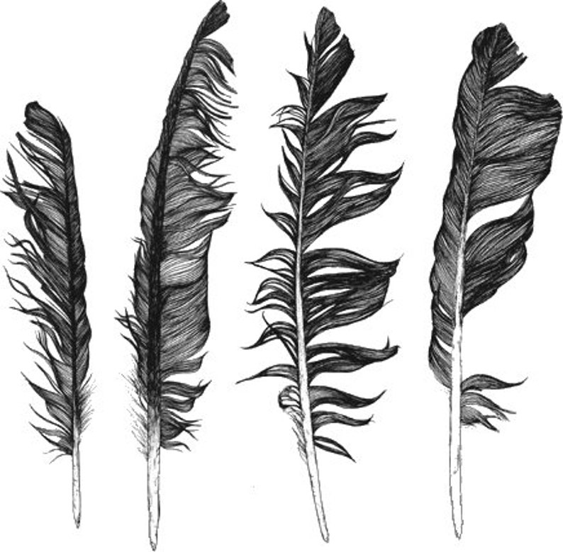 Temporary Tattoo  4 types of Feathers Tattoos / Tattoo Flash Pic. 1