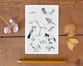 Postcard Birds of New Zealand, pretty illustrated postcard, wildlife chart, Kiwi, heron, Tui postcard, travel memory card, New German Shop