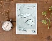 Fish Postcard, New Zealand fish postcard, illustrated sea life postcard, wildlife chart, shell postcard, fisherman gift, shop in Germany