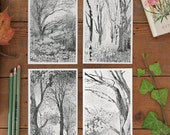 4 Postcard Set Trees, woodland decor, fall tree picture, postcrossing, beautiful, detailed pencil illustration of forest, black & white, new